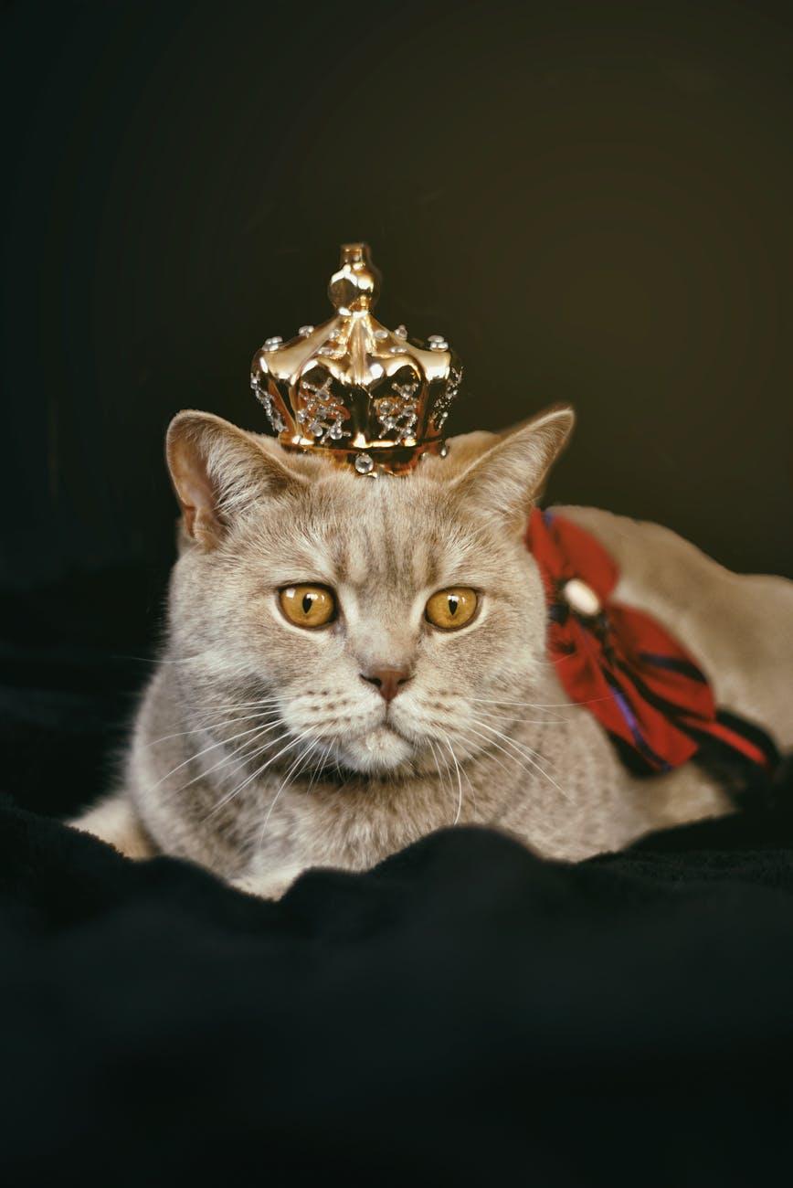 工程師發明人工智慧貓窩,讓流浪貓吃得飽住得暖!(上)