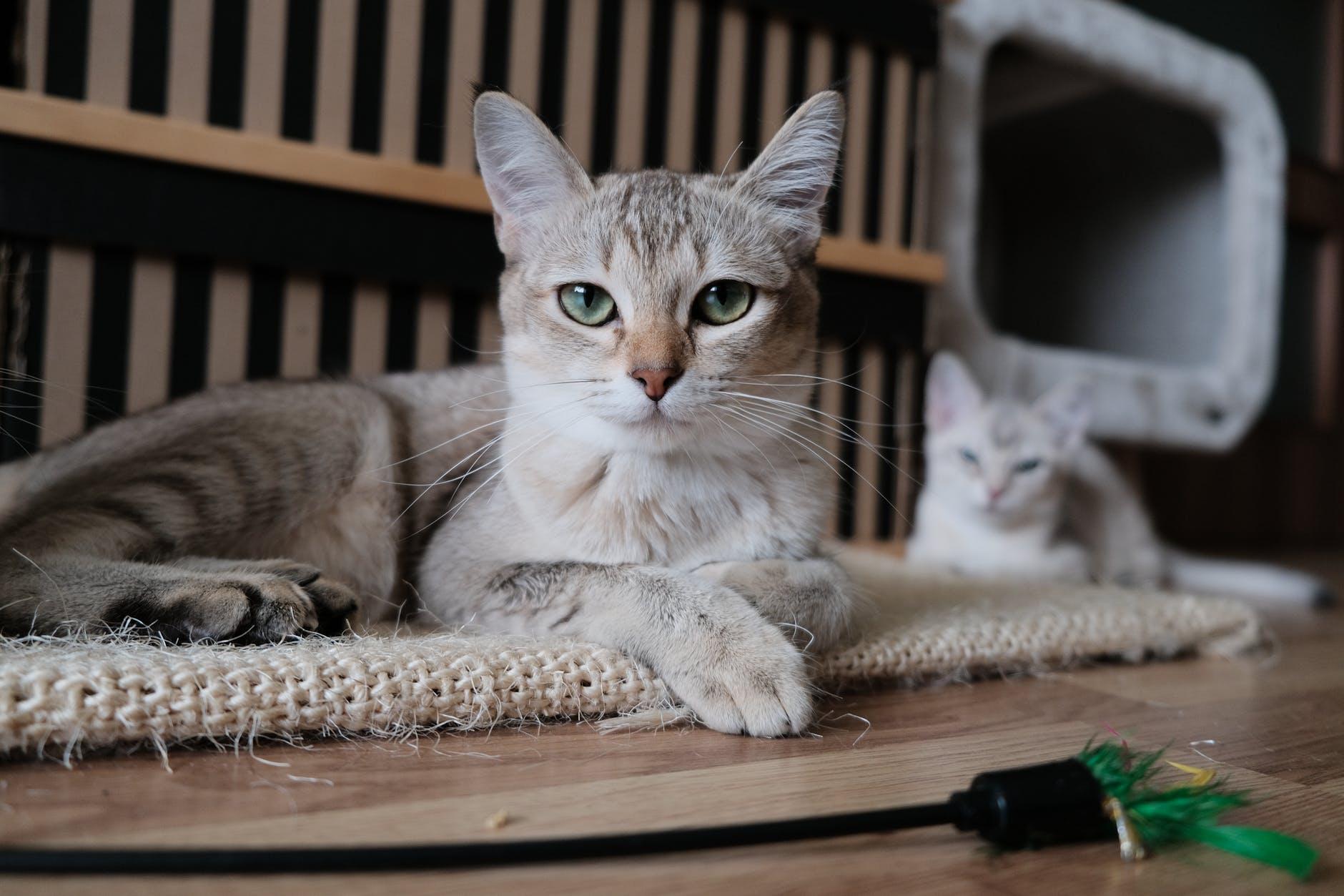 工程師發明人工智慧貓窩,讓流浪貓吃得飽住得暖!(下)