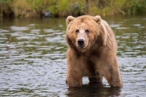 熊臉辨識人工智慧又是什麼把戲?一起來看看這新發明!