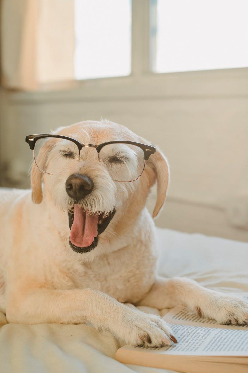 這AI導盲犬是如何被研發?今天來介紹!